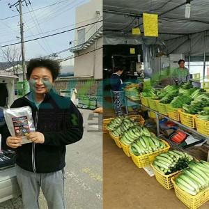 韩国客户试用芽孢杆菌种植黄瓜实例!