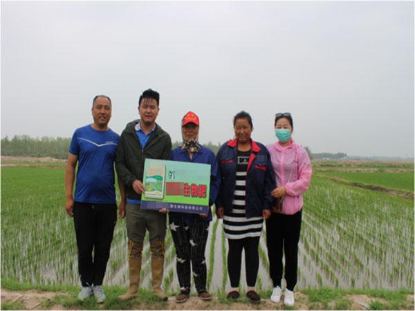 使用江苏绿科生物产品后产量提高,种植户很满意