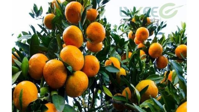 微生物菌剂如何助柑橘销量倍增!