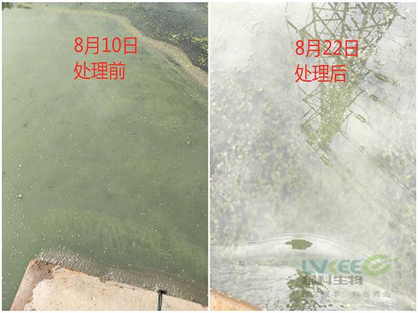 老绿水处理前后对比
