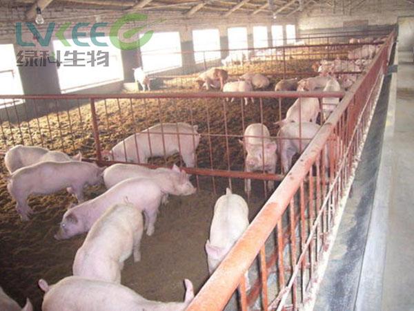 江苏绿科养猪户