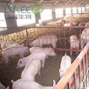 扬州本地养猪户使用江苏绿科专门养猪复合益生菌的案例!