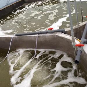 工厂化水体杂质及相关问题处理方案-江苏绿科生物