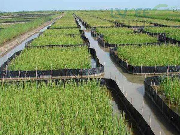 养殖稻田虾 (2)