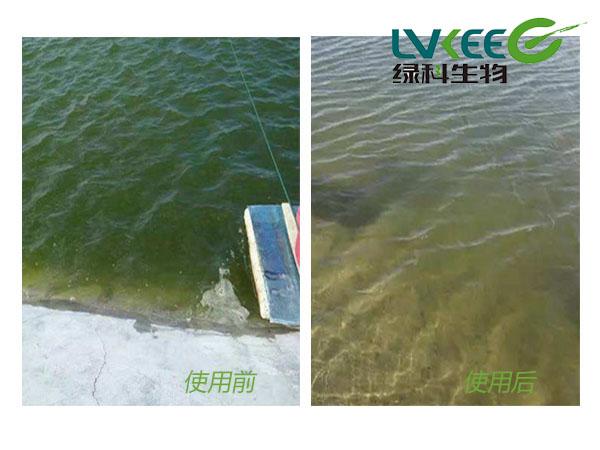 水质过浓、藻类偏多前后使用图片