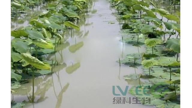 秋季塘口有浮萍,快用复合益水菌来帮您!