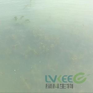 水产养殖白对虾弧菌感染死亡案例!
