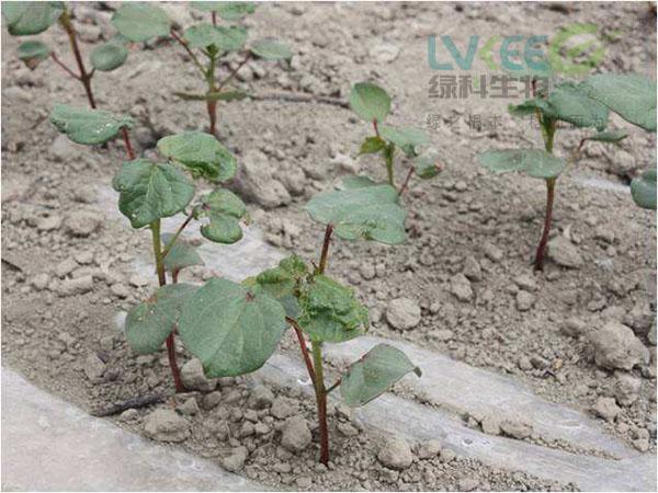 化肥使用过多土壤