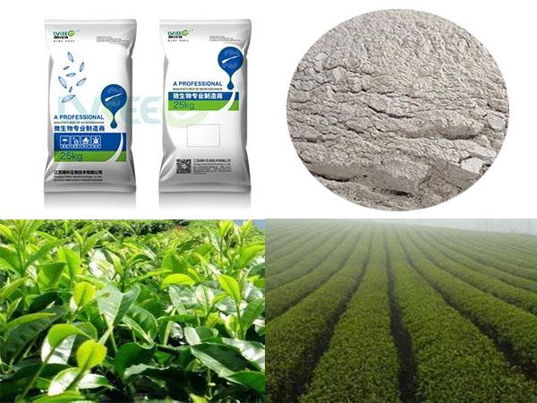 绿科生物微生物菌粉种植茶树