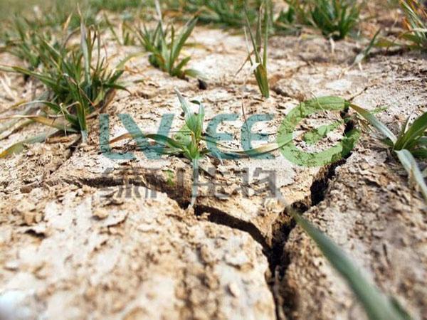 土壤盐碱化严重