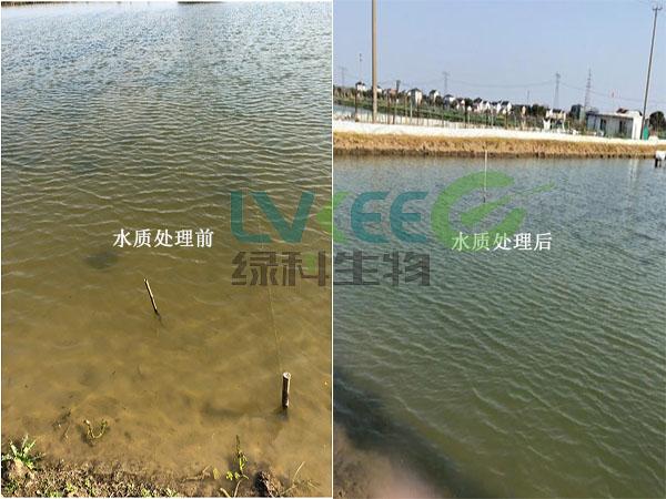 螃蟹池塘调水长草