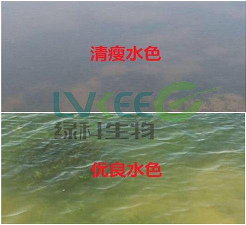 绿科水产养殖图片
