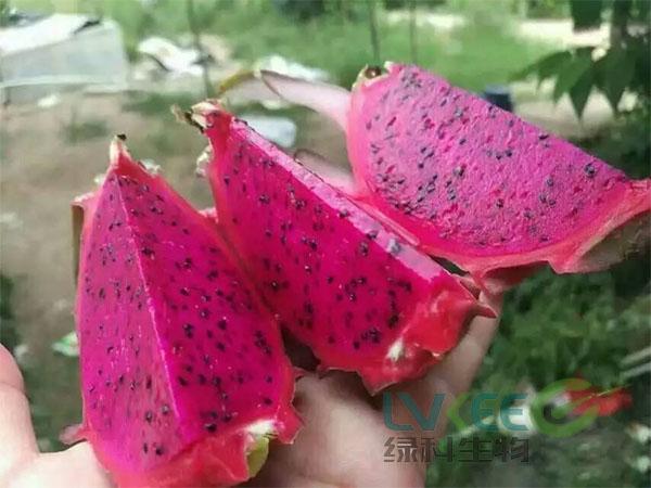 果实口感甜度增加枯草芽孢杆菌