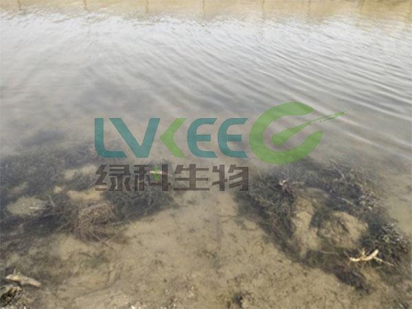 水产养殖中氨氮超标