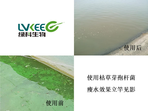 瘦水抑藻使用前后
