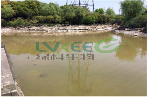 未使用过江苏绿科生物的环保菌剂水质量2