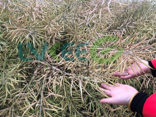 枯草芽孢杆菌复配的菌种种植