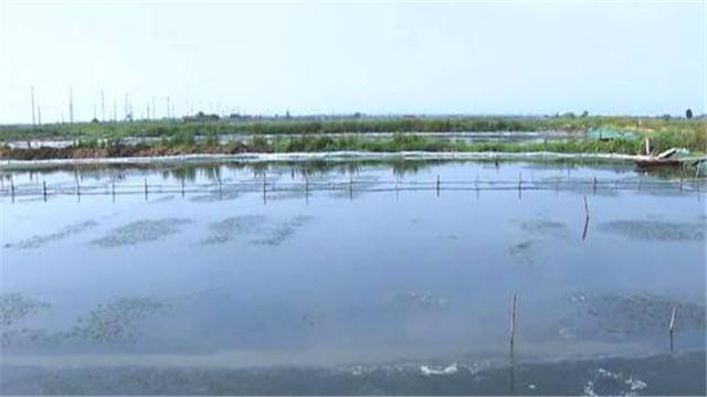 可用于河蟹池塘的微生物制剂有哪些?有什么作用?如何调水?