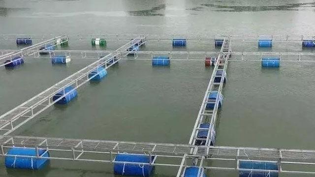 养虾碰到这四种异常水质该怎么办?