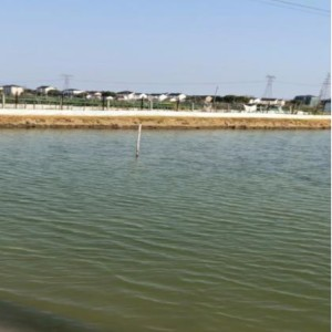 螃蟹池塘调水长草案例--江苏绿科生物