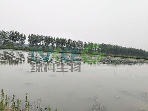 池塘底质恶化