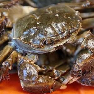 【案例分享】助河蟹蜕壳和育肥的案例!