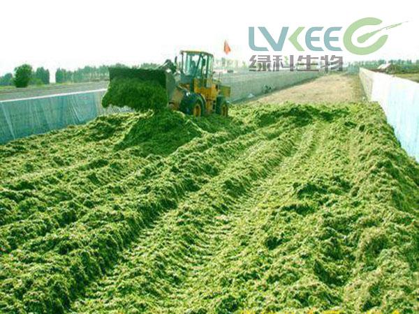 绿科青贮饲料发酵剂