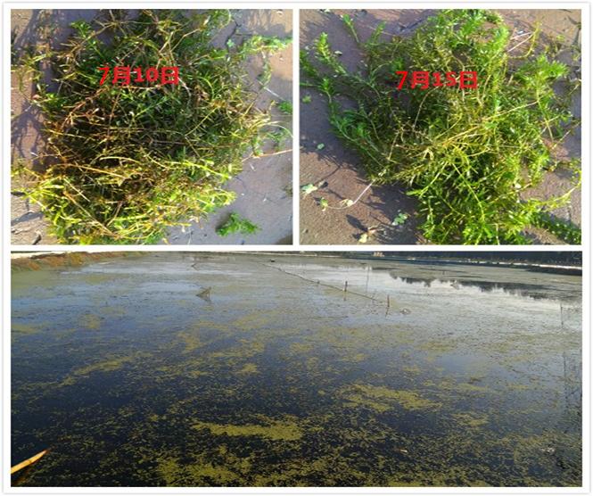 微生物种植水草