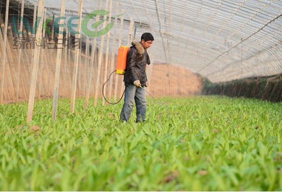 使用枯草芽孢杆菌种植有机蔬菜