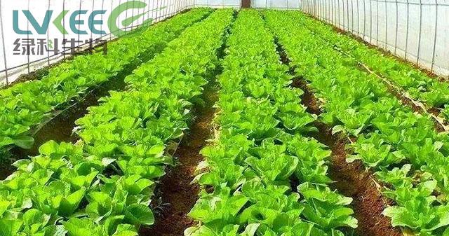 使用过添加江苏绿科生物复合益肥菌做成的有机肥料种植的蔬菜