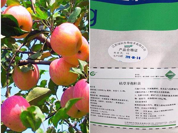 苹果种植枯草芽孢杆菌