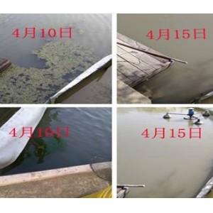 河蟹塘青苔处理案例-江苏绿科生物