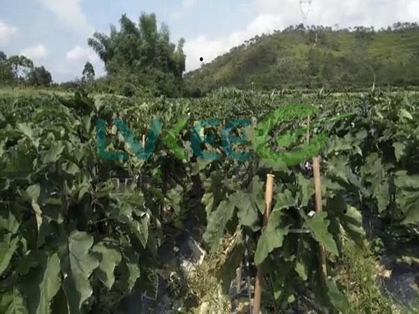 枯草种植蔬菜