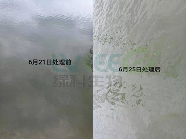 鱼塘稳水处理图片