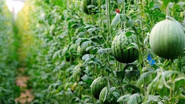 生物有机肥如何从提高肥力到提高产品品质