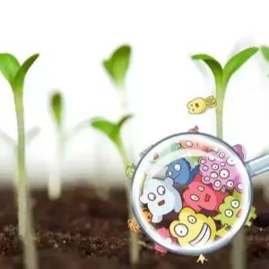 太优秀了!菌肥中的微生物到底有多厉害?