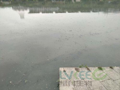 荥阳新田城景观湖未处理