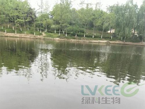 荥阳新田城景观湖处理后