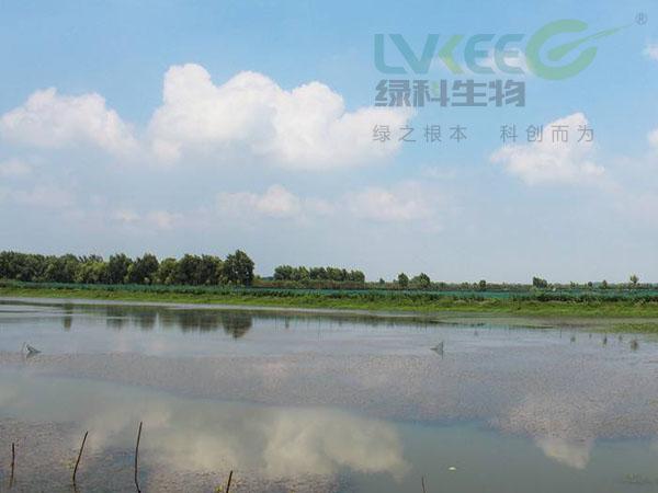 高温季节河蟹养殖