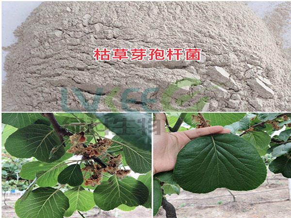 枯草芽孢杆菌改善土壤