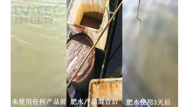 河蟹水体白浑浊处理,经验分享!
