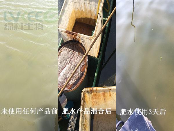 河蟹水体白浑浊处理前后